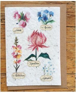 Fleurs des champs botanique
