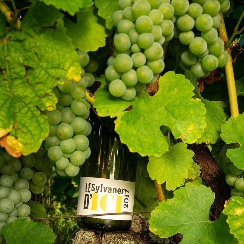 Vins d'Alsace
